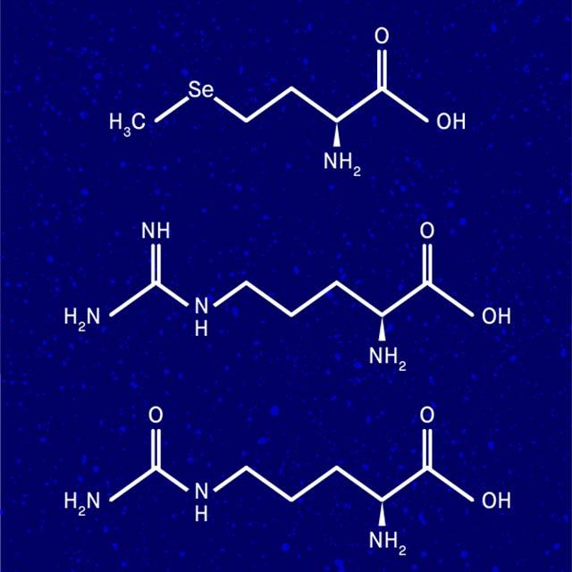 The Skin Supplement Ingredients
